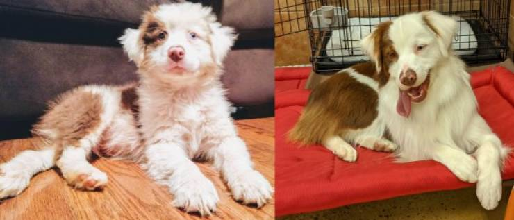 Are You Ready For Some Before-And-Afters Of Dogs?!