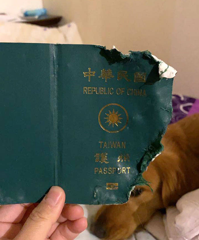 Dog Saves His Owner From Going To Wuhan, China