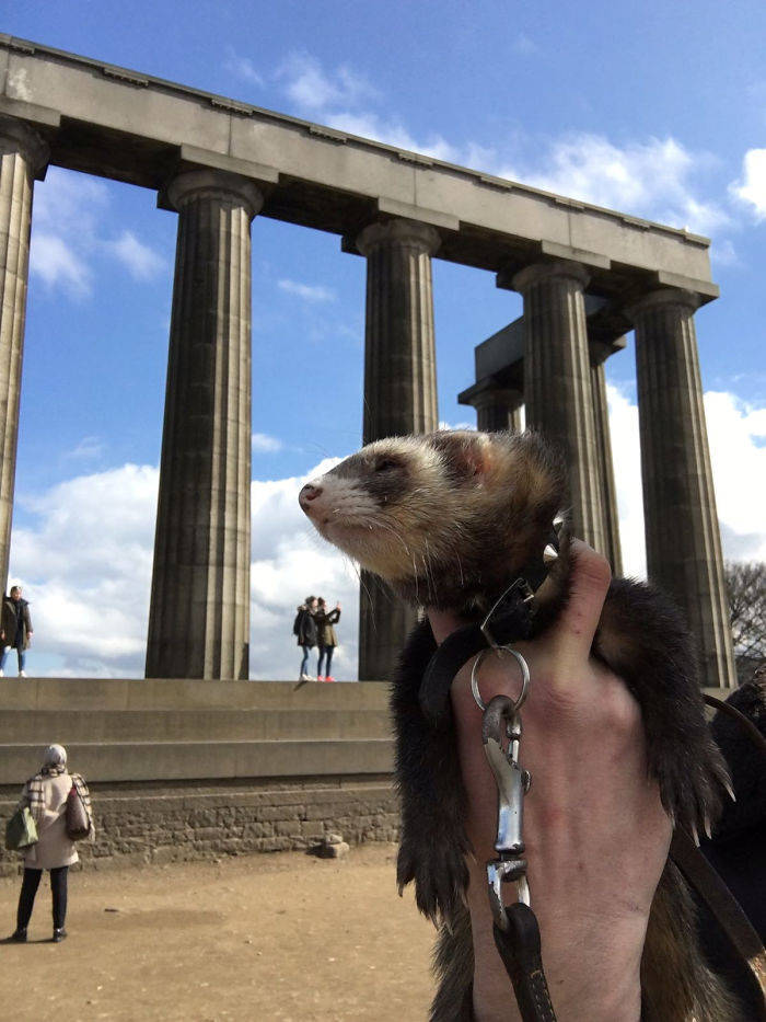 Guy Loses Three Of His Close Ones, Sells Everything And Goes On An Adventure With His Pet Ferret