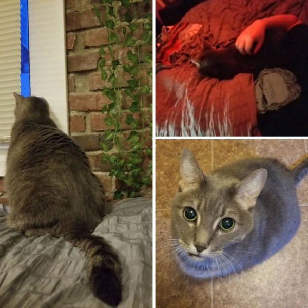 Rescued And Adopted Pets Are Even More Adorable!