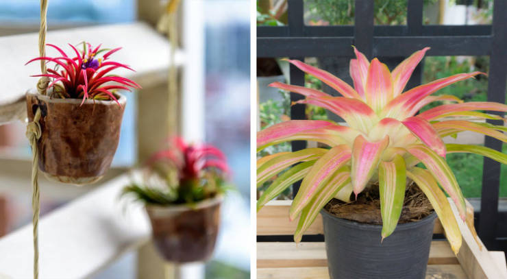 Houseplants That Affect Your Health In A Good Way