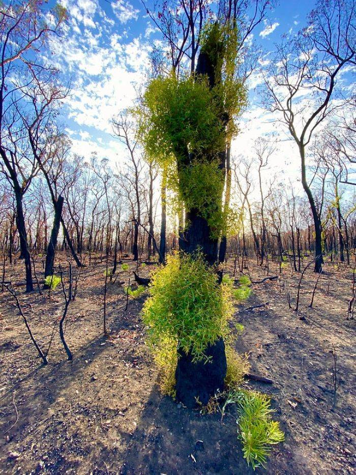 Photos Of Australia Coming Back To Life After The Bushfire Catastrophe
