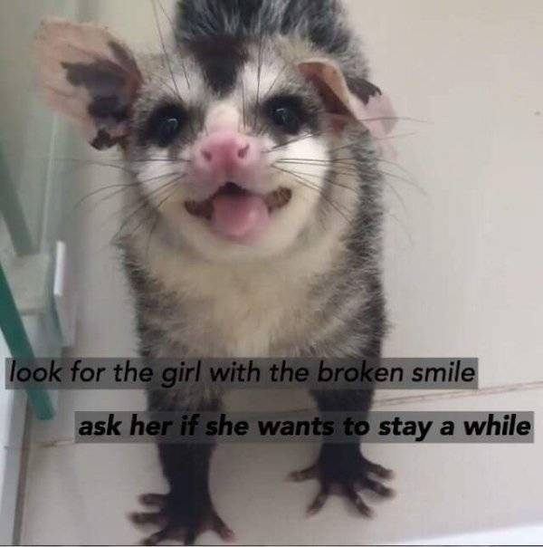 In Case Of Emergency Look At Possum Photos!