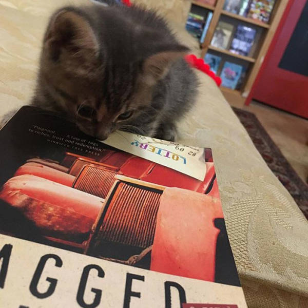 This Canadian Bookstore Is Owned By Kittens!