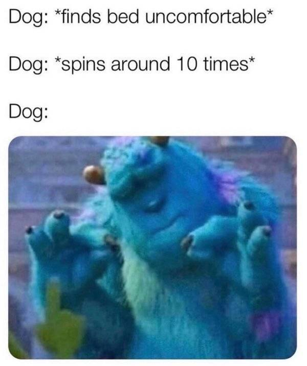 Dogs Are Ready To Check These Memes Out!
