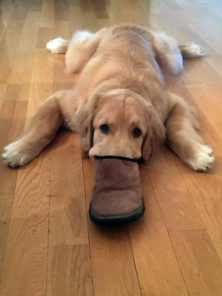 Any Dog Can Turn Into A Platypus!