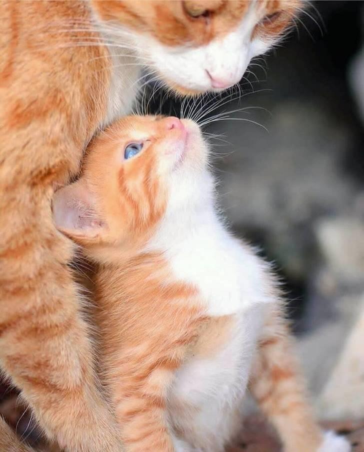 Pets Love Everyone!