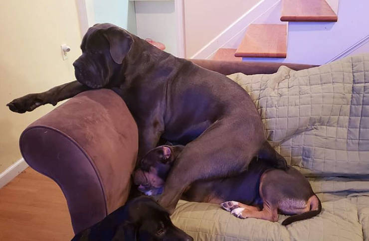 A Dog That Shows Love To His Sister By Sitting On Her