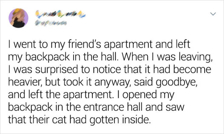 Cats Won't Leave You Alone, Even If You Want It…