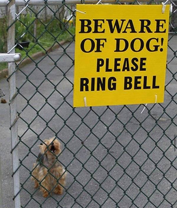 Warning! These Dogs Will Try To Guard You!