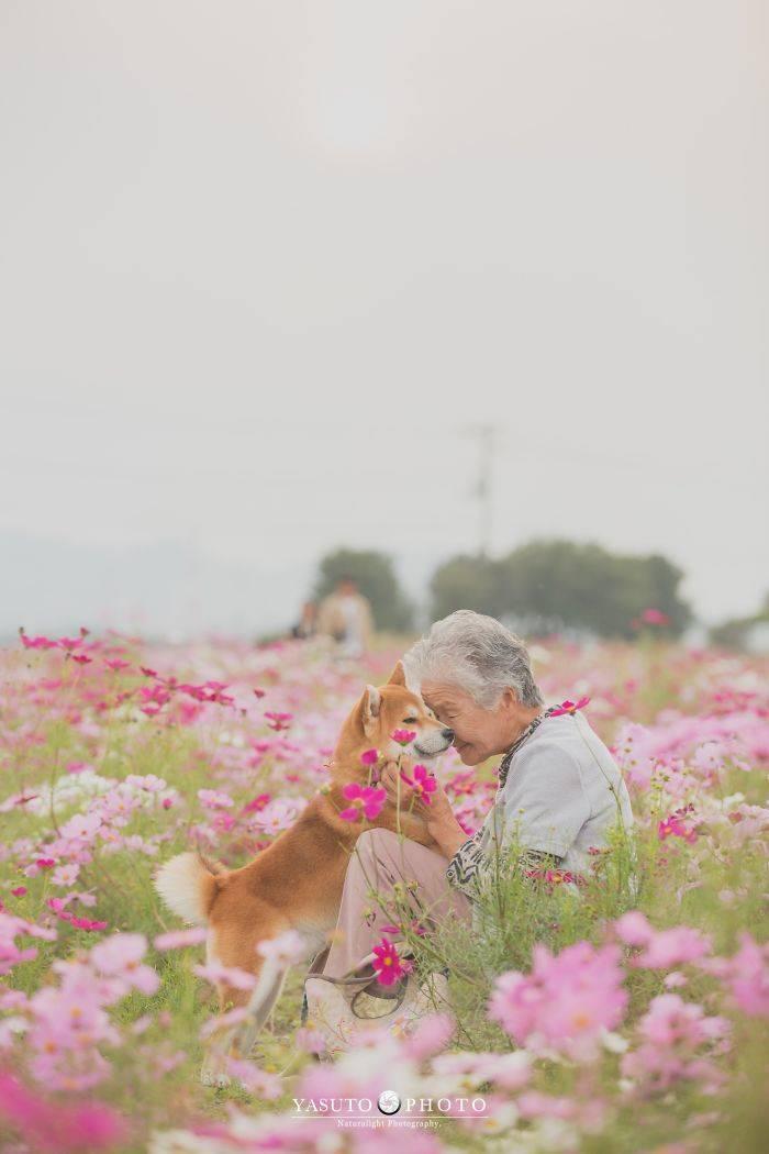 Grandmother Loves Her Shiba Inu. Shiba Inu Loves Her Grandmother.
