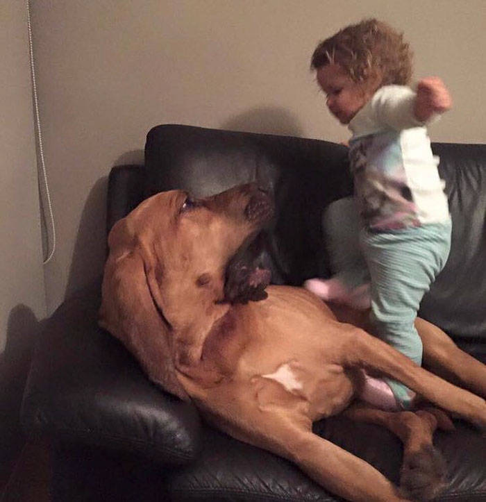 Why People Shouldn't Allow Kids To Mistreat Pets