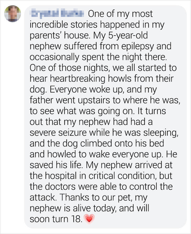 When Pets Become Heroes