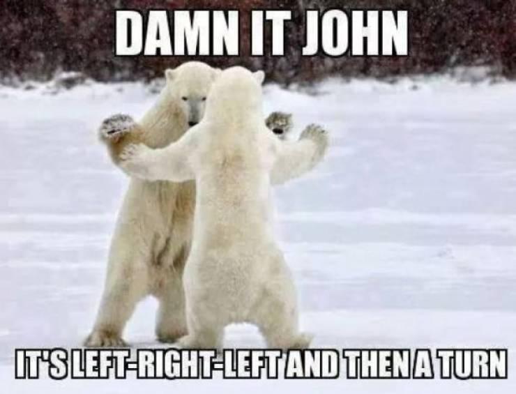 Yeah, Polar Bears Are Actually Funny!