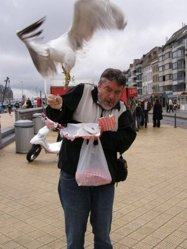 Seagulls Stealing Food Are Funny And Terrifying