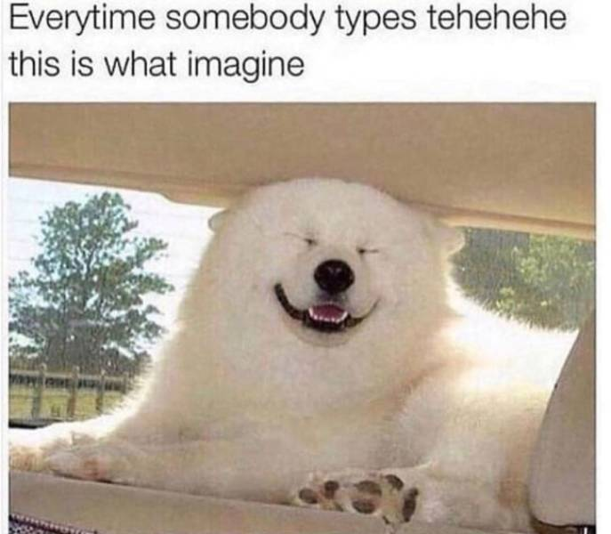 Dogs Love These Memes!
