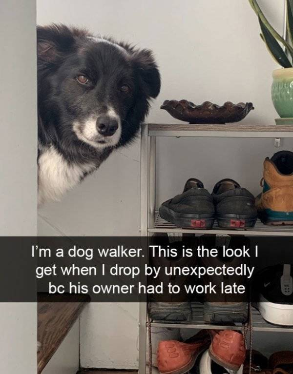 Dogs Rule Over Snapchat!