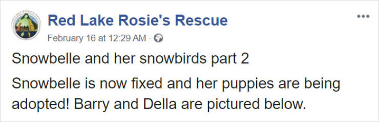 Six Puppies Survive Cold Weather Thanks To Their Mom, Get Saved By Humans
