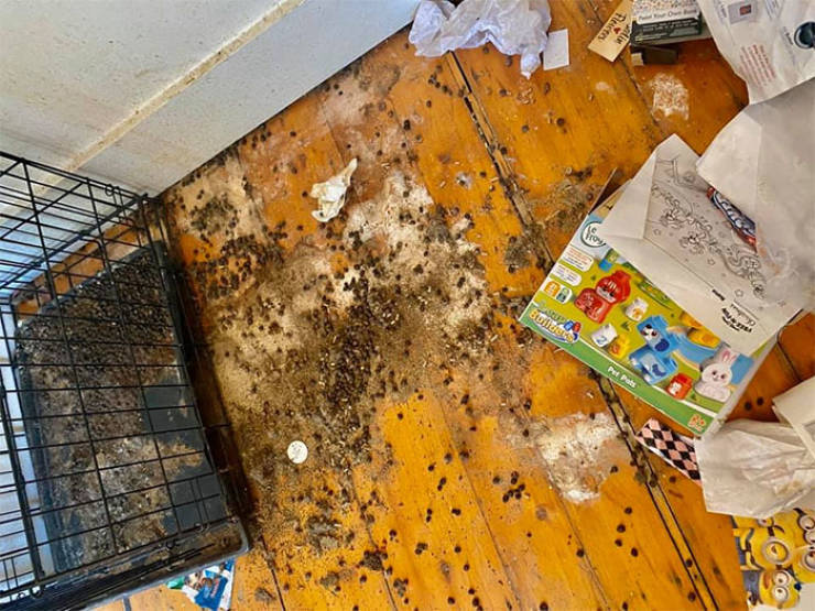 Landlord Shows Some Disgusting Photos To Explain Why Security Deposits Are A MUST!