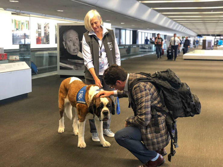 "Meet The ""Wag Brigade"" Of San Francisco Airport!"