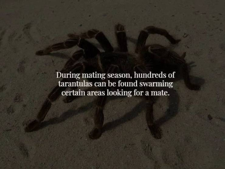 Starting The Week With Some Creepy Facts!