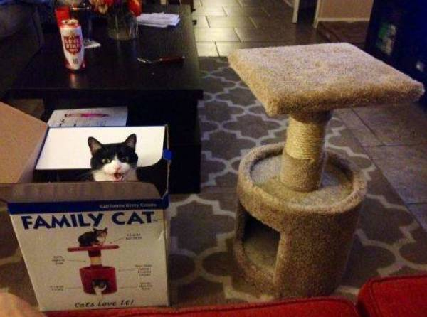 Cat Owners Will Understand These Photos