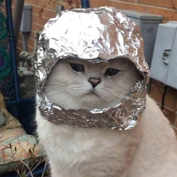 Protect Your Cat With A Tinfoil Hat!