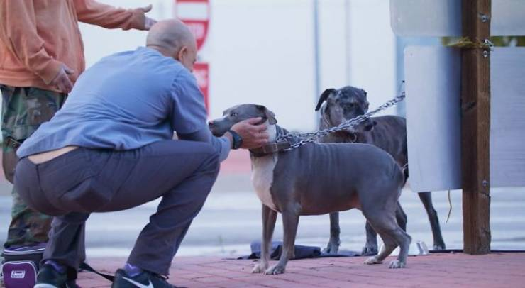 This Californian Veterinarian Treats Homeless People's Animals For Free!
