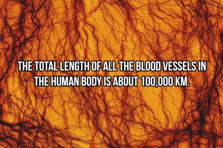 Human Body Is Incredible!