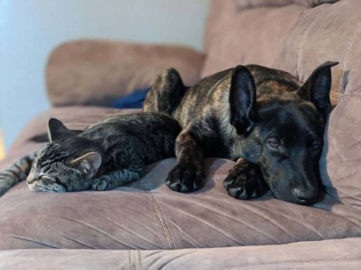 Warm Your Heart With These Adopted Pet Stories