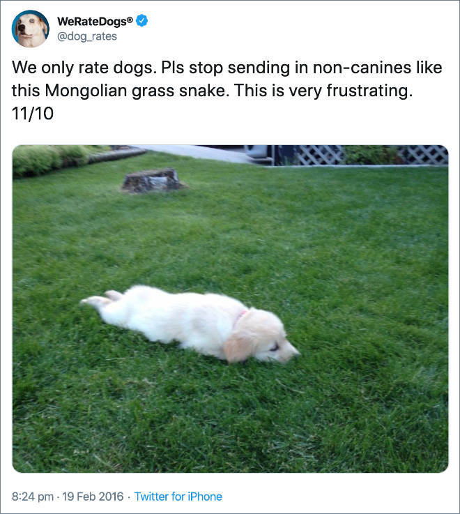 They ONLY Rate Dogs!
