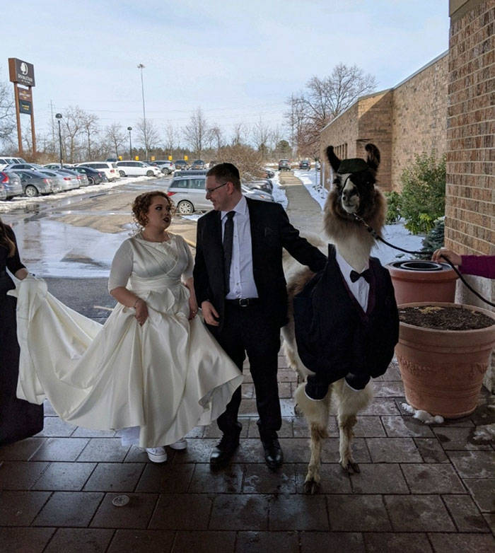 Guy Promises To Crash His Sister's Wedding With A Llama, Delivers Five Years Later