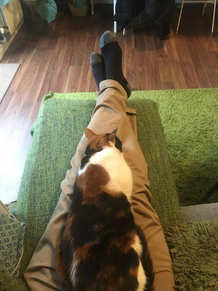 Super-Clingy Cat Gets Tricked By Her Owners