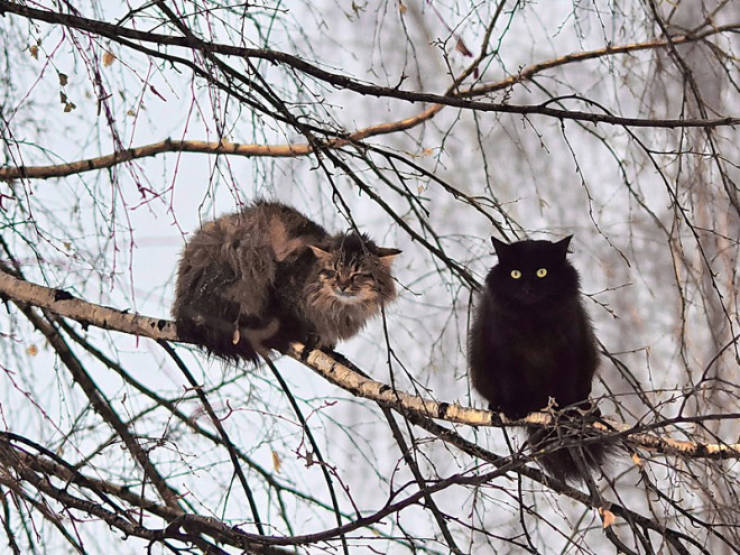 Spring Is The Season When Cats Fly Back From The South