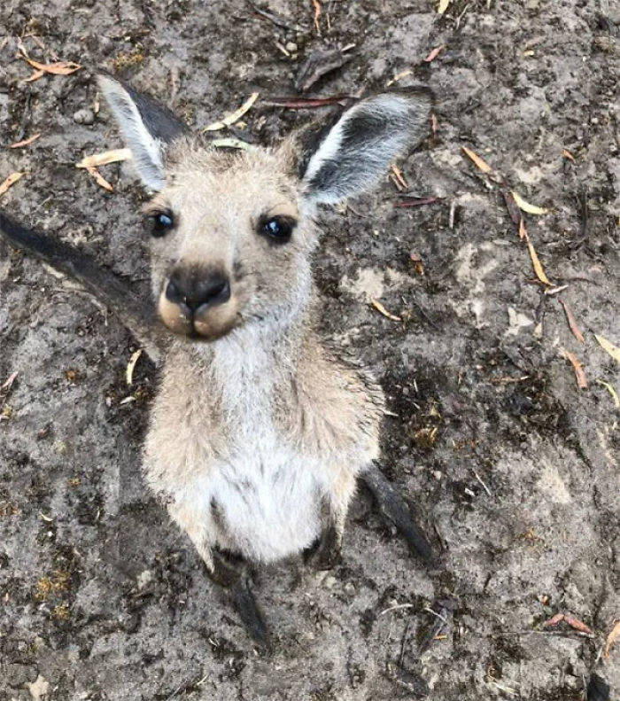 Guy Adopts A Kangaroo, But Doesn't Know About It