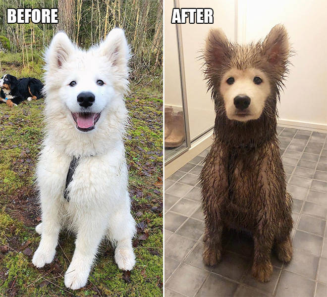 What Happens When You Let Your Dog Play In The Mud