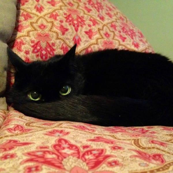 Black Cats Are Fantastic!