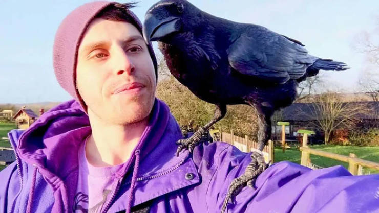 This Domesticated Raven Behaves Like He's A Dog!