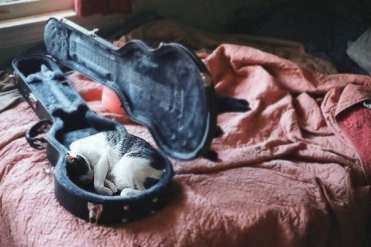 Cats Don't Care About Sleeping Comfort