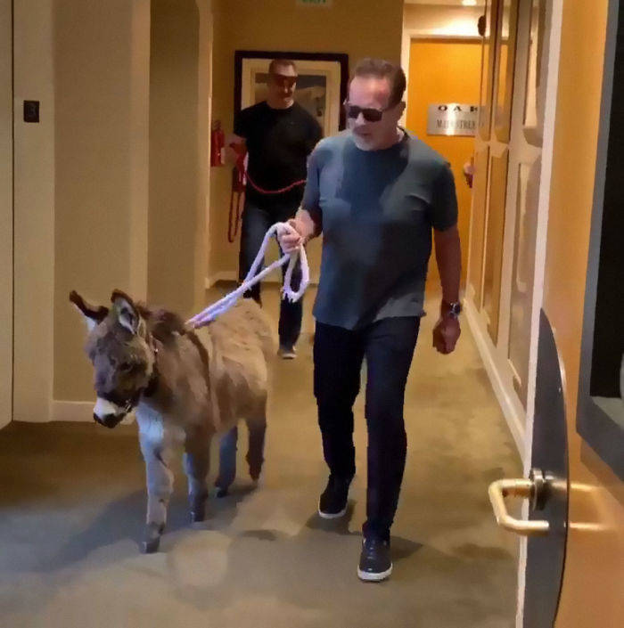 It Appears That Arnold Schwarzenegger Is Quite A Wholesome Redditor!