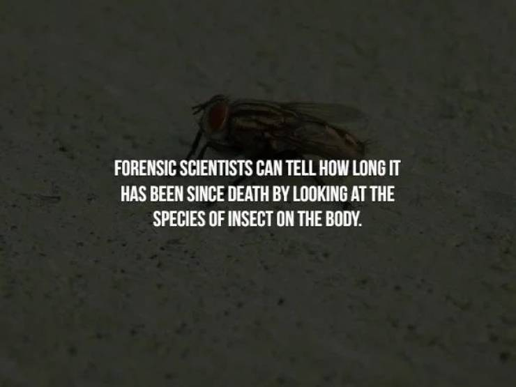 Creepy Facts Activated