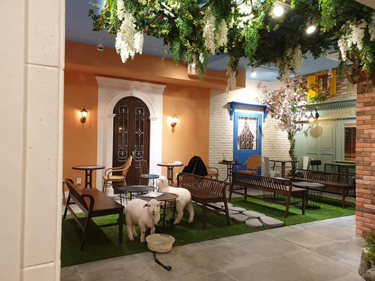 Have You Ever Seen A Sheep Being Washed? This Korean Café Will Show You Just That