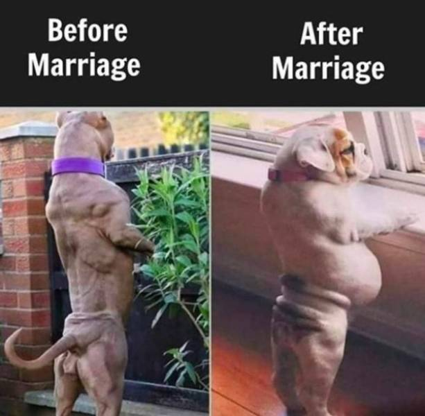Married? Take These Memes