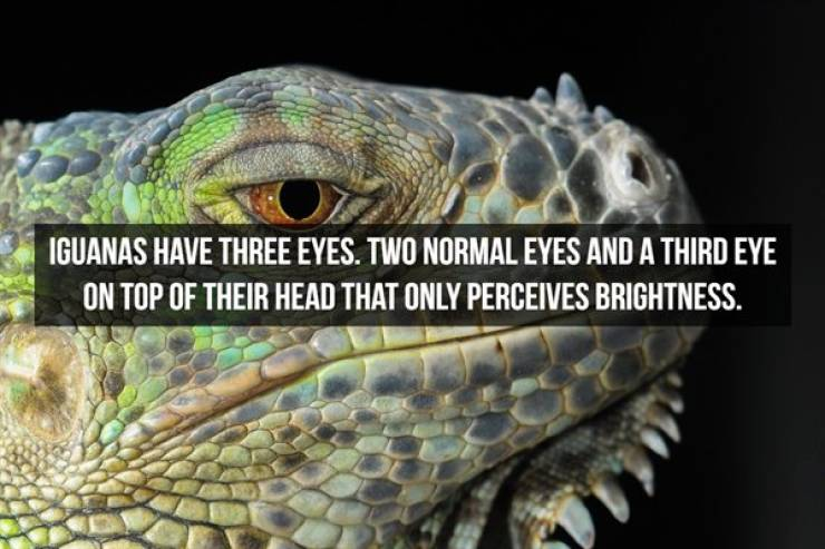 Well, They Say These Weird Things Are Facts…