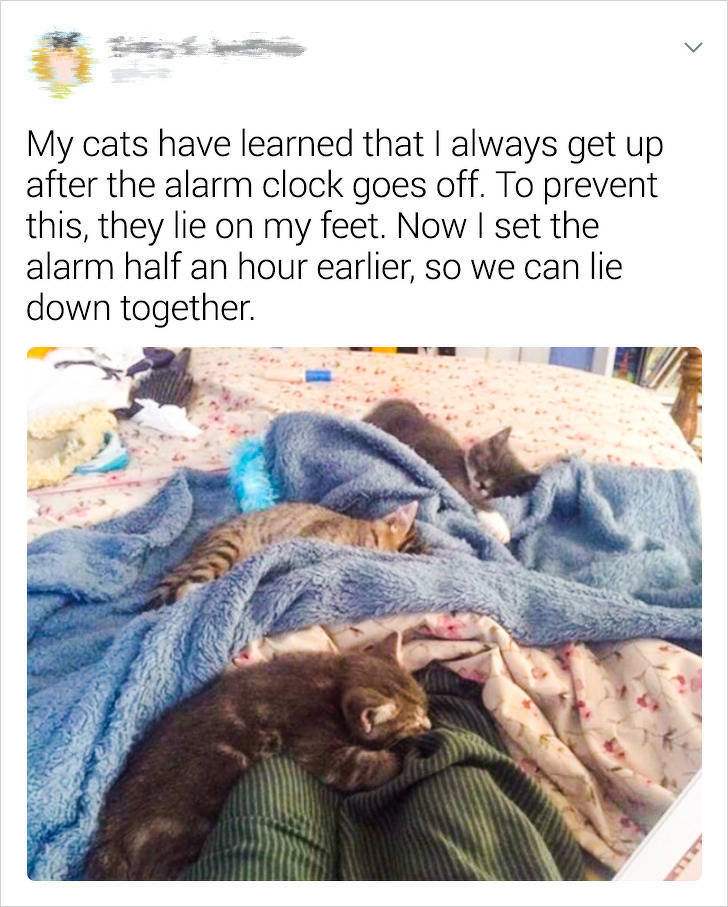 Do You Still Think Cats Are Your Pets? Not Owners?