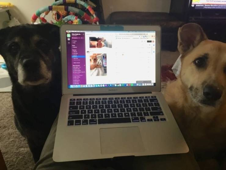 Pets Are Ready To Work From Home During Quarantine!
