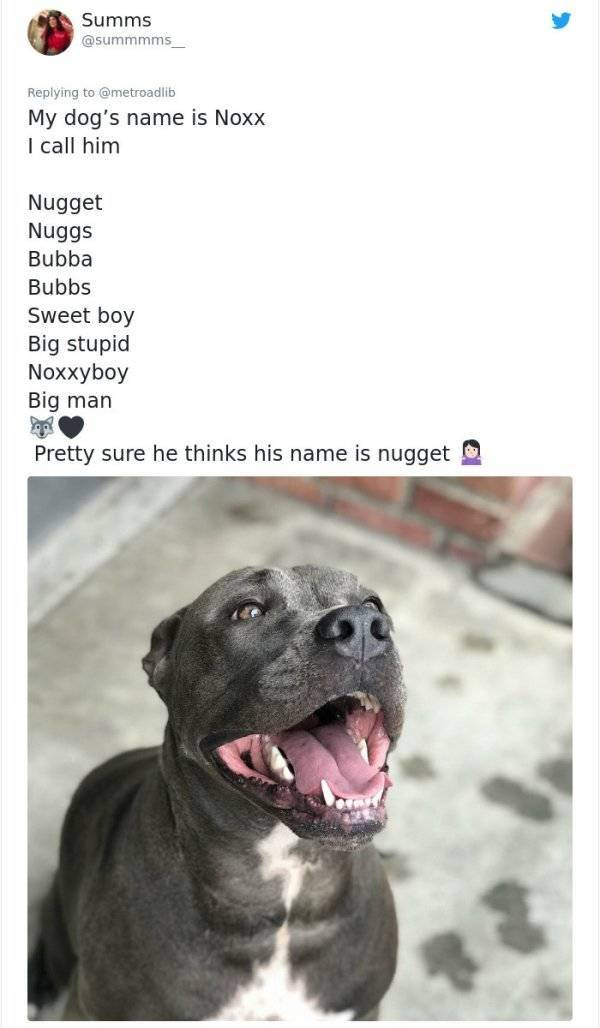 Pets Who Have Way Too Many Bonus Names