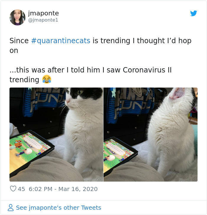 Cats Absolutely Love Quarantine!