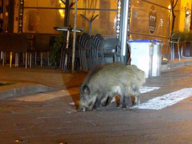 Animals Retake Cities During Coronavirus Quarantine