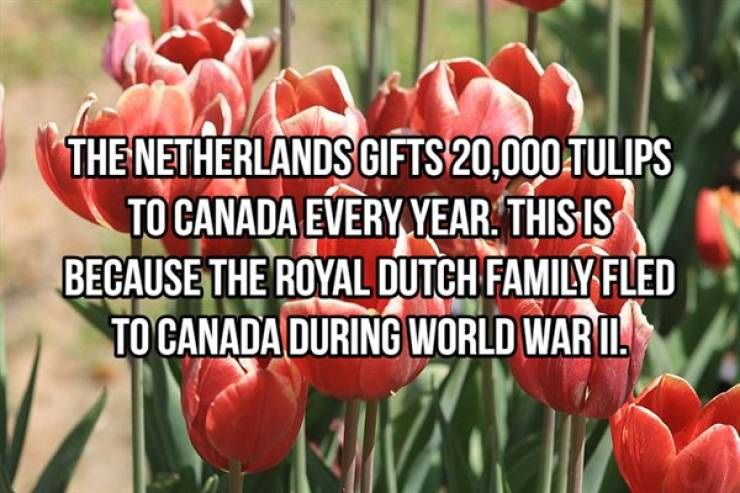 Who Doesn't Need A Happy Fact Right Now?